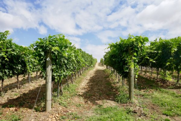walla walla washington wines