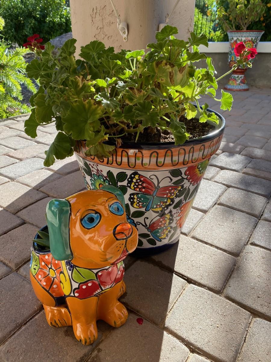 Wickenburg: Exploring Close to Home in Arizona