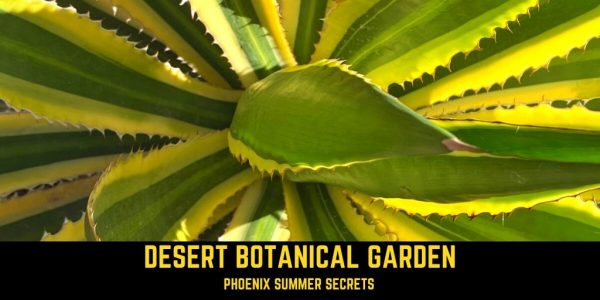 Looking for a place to explore #closetohome in Arizona? #Travel with @southwestliz to @dbgphx, located in Papago Park. Stroll through the 140-acre #botanicalgarden to uncover hidden secrets on 5 themed trails.