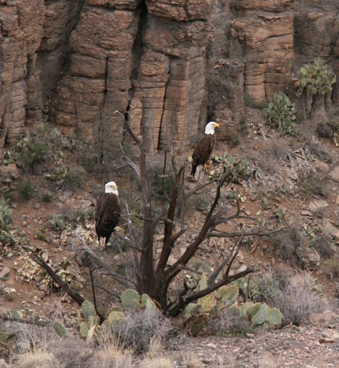 Arizona Eagles - Verde Valley