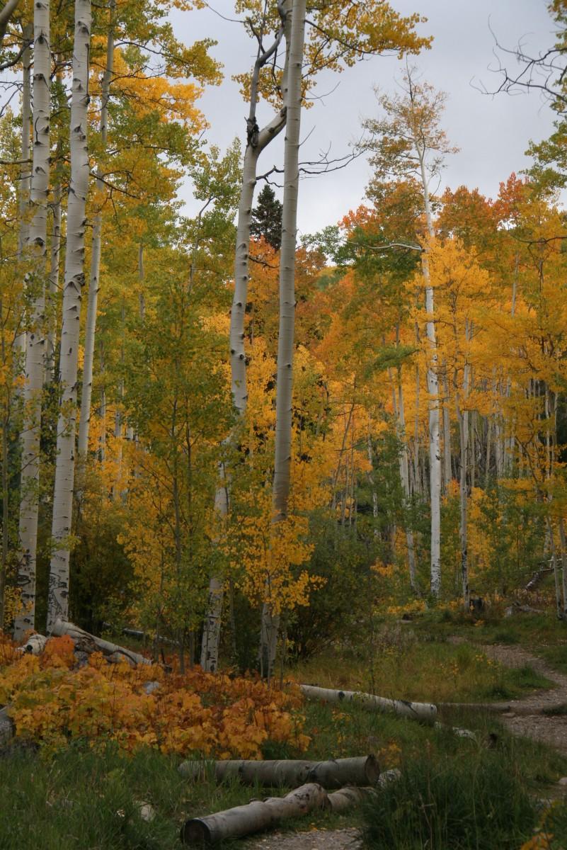Santa Fe Fall Color - Fall Colors in the Southwest