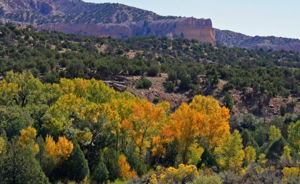 Fall in New Mexico - Fall Colors in the Southwest