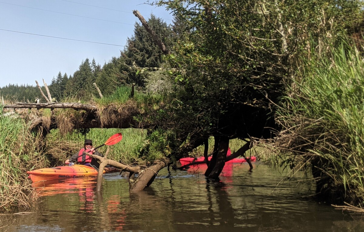 Maneuvering a kayak under a fallen tree is an adventurous thing to do in Coos Bay.