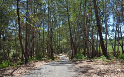 Forest Bathing: Learning to Be in the Moment