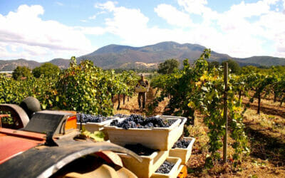Prima Materia Boutique Winery:  Bringing Italy to California