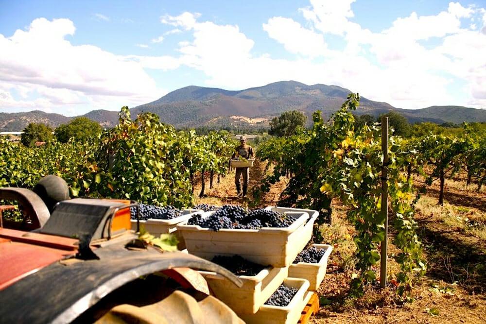 Prima Materia Vineyard © Pietro Buttitta